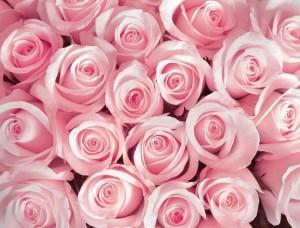 Fototapet cu trandafiri roz -2168