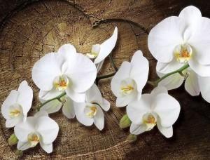 Tapet mesaj de dragoste şi orhidee -1014