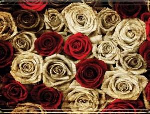 Fototapet cincizeci de trandafiri de toate culorile - 3101
