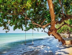 Leagăn pe un copac aflat pe plajă - 11850