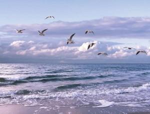 Fototapet pescăruşi pe o plajă pustie - 13051
