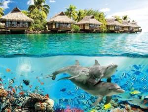 Tapet mural viaţă subacvatică cu recif de corali - 3193