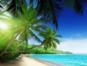 Fototapet palmieri verzi pe o plajă îndepărtată, imagine relaxanta - 736