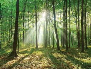 Fototapet peisaj cu raze de soare - 10329