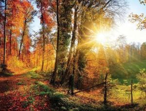 Fototapet colorat, pădure toamna şi răsărit de soare - 12108