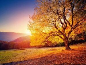 Fototapet colorat, pădure toamna cu frunze căzătoare - 12640