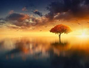 Fototapet cu un copac magic în mijlocul unui lac - 13003