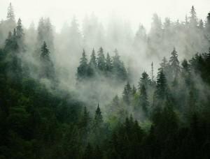 Fototapet cu o pădure în ceaţă - 13026