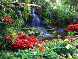 Tapet zen, flori lângă o mică cascadă - 166