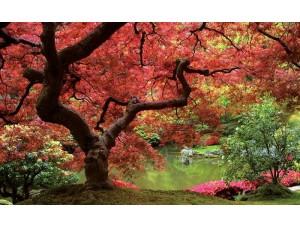 Tapet cu un pom cu frunzele căzând într-o grădină cu lac - 270