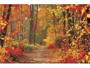 Tapet cu o potecă, toamna în pădure - 4-002
